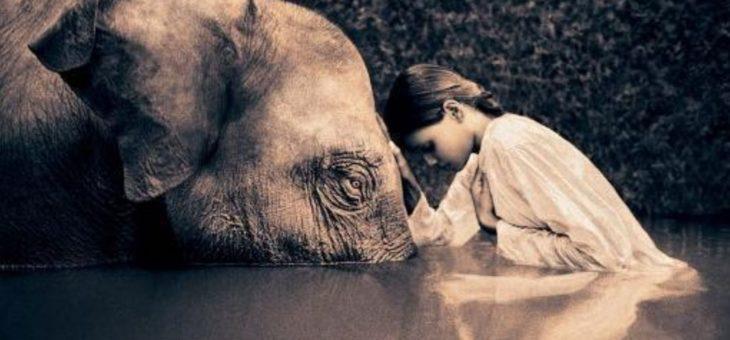 La compassion, première étape vers la méditation ?