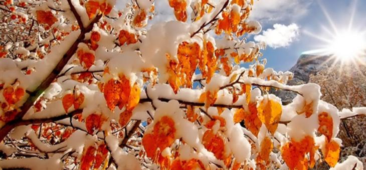 Exploration de la forêt et yoga du froid – 2 février dans la forêt de Saou (Drôme)