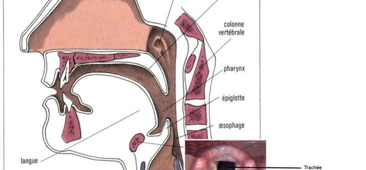 La respiration Ujaï (ou Ujayyi) aux multiples bienfaits