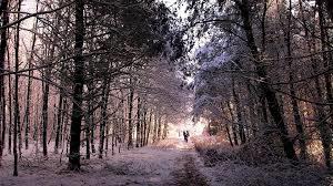 Yoga du froid et forêt
