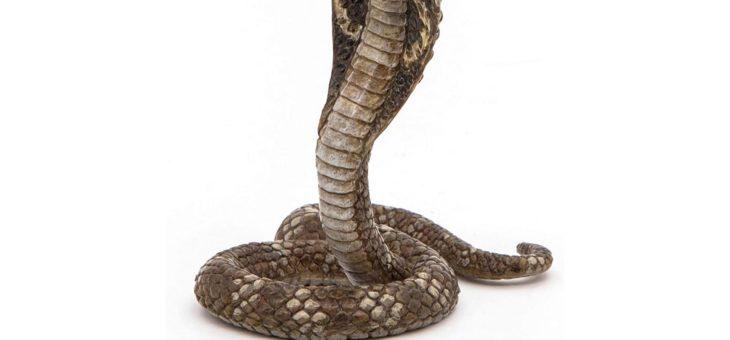 Bhujangâsana – le Cobra