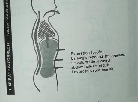 Le rôle de la sangle abdominale dans la respiration yoguique