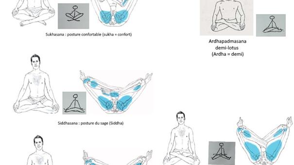 Les postures assises : Sukhâsana, Siddhâsana, Svatiskâsana, Padmâsana